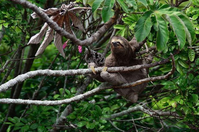 Nová fakt o lenochodech
