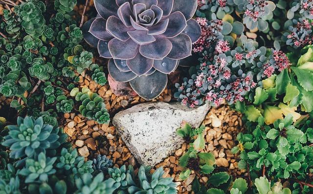sukulenty na zahradě