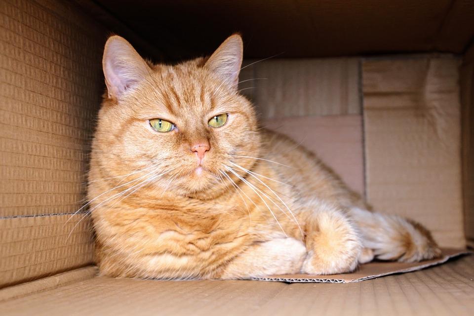 kocour v krabici